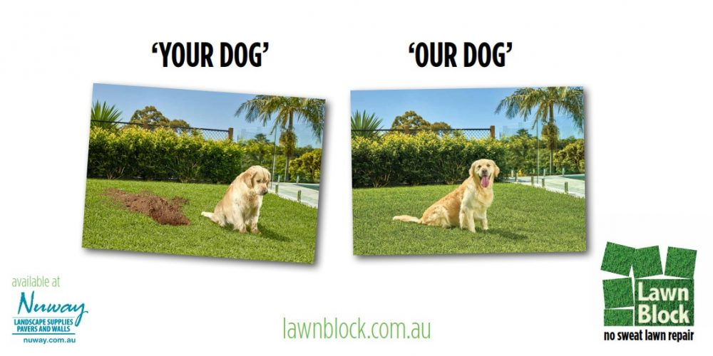 Lawn Block Your Dog Our Dog No Sweat Lawn Repair