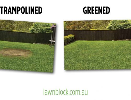 Lawn repairs are conducted daily for reasons such as