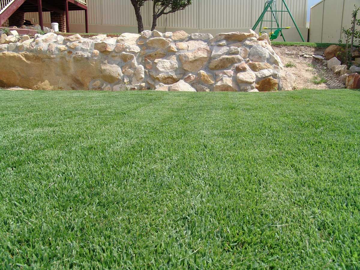 Zoysia Grass 34