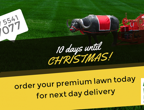 You've Still Got Time To Fix Your Lawn For Christmas!