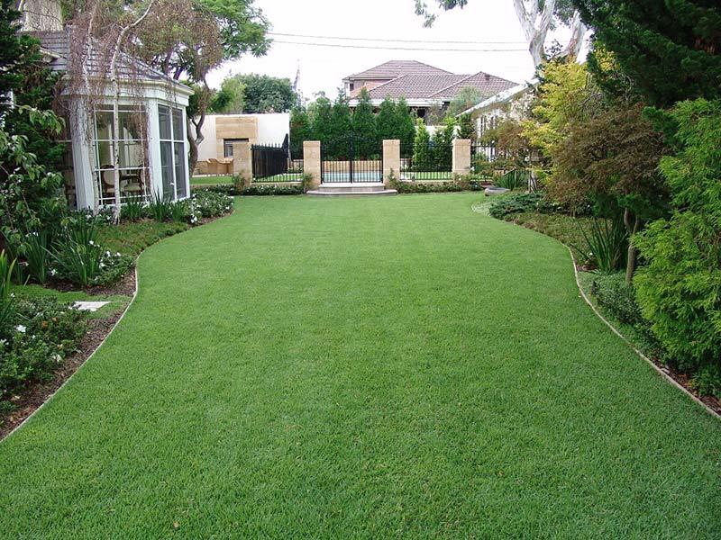 Zoysia Grass 14