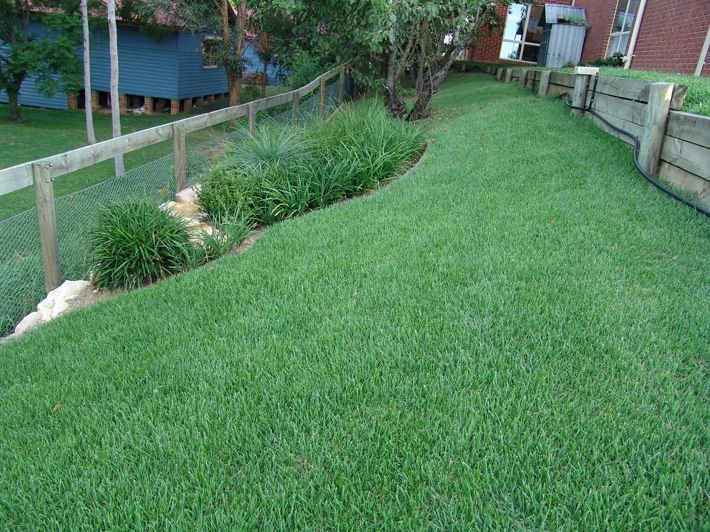 Zoysia Grass 2