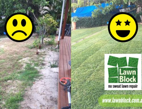 If you have a smaller area of damaged lawn that you need patching fast then try our Lawn Block and get lawn happy again!