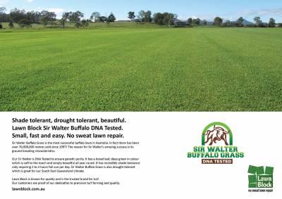 Lawn Block Sir Walter Buffalo Grass DNA Tested ad4