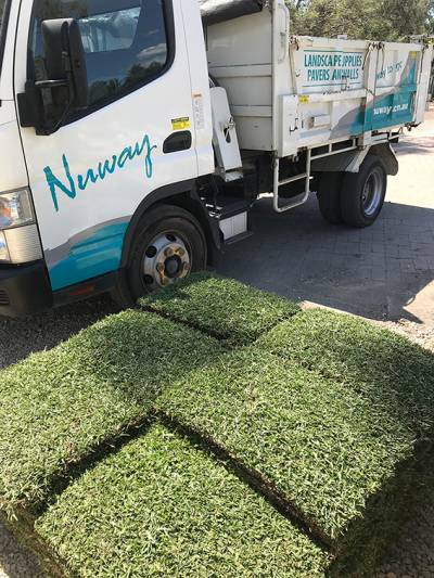Sir Walter Buffalo Grass DNA Tested Lawn Block at Nuway Landscape Supplies IMG_21331