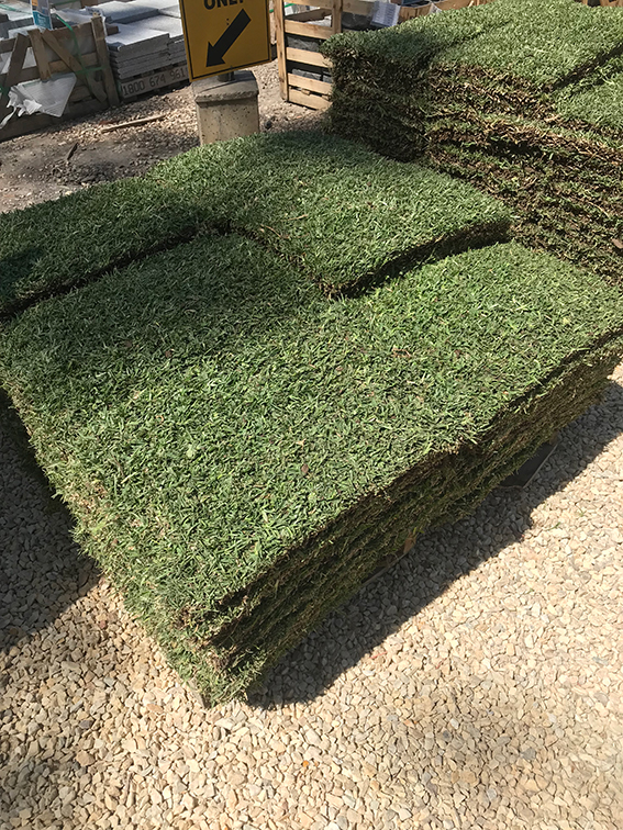 Sir Walter Buffalo Grass DNA Tested Lawn Block at Nuway Landscape Supplies IMG_21361